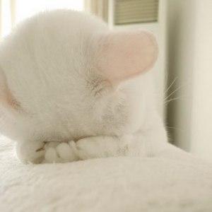61-ashamed-cat2
